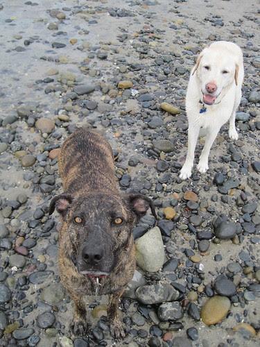 Reesie and Dukie