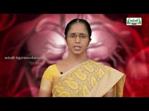 NEET Zoology  Blood Circulatory System இரத்தச் சுற்றோட்ட மண்டலம் Kalvi TV