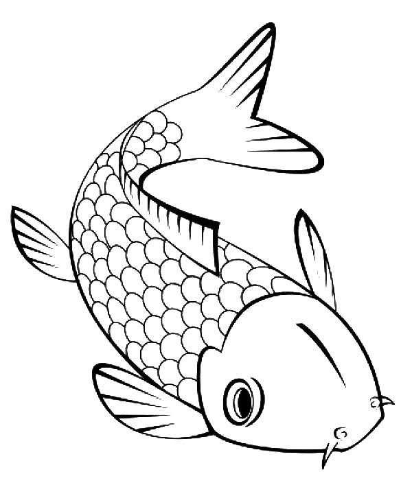 Koi Fish Outline Drawing at GetDrawings   Free download