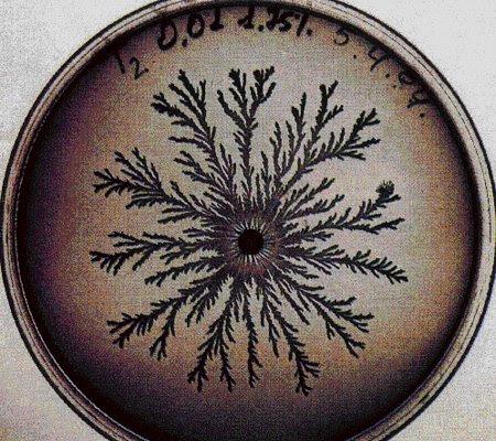 vie petri bacterie jardin 11 De la vie dans le petri  technologie art