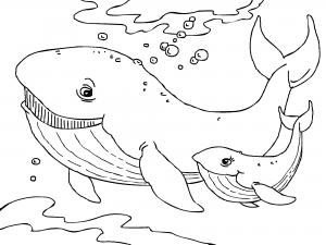 Dibujos De Animales Marinos Para Colorear Paracolorear Net