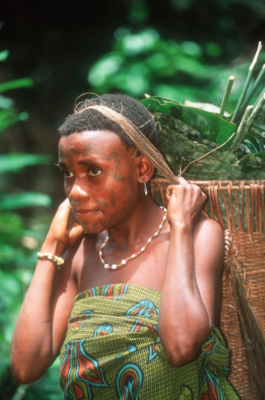 Aka Pygmy People Egalitarian Society on Gender Inequality And Contributions To Society