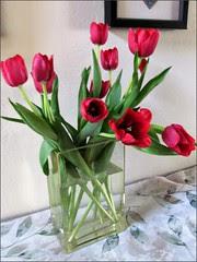 Thanksgiving tulips 1