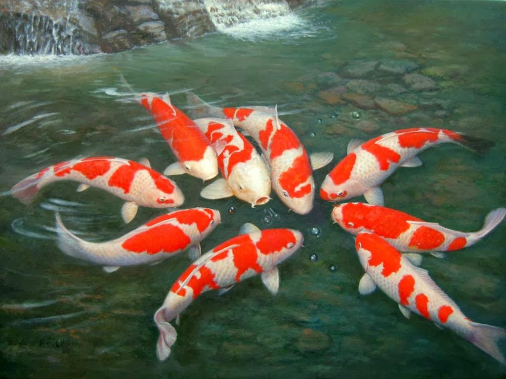 Koleksi Dp Bbm Bergerak Lucu Ikan  Kocak Dan Gokil Puzzle