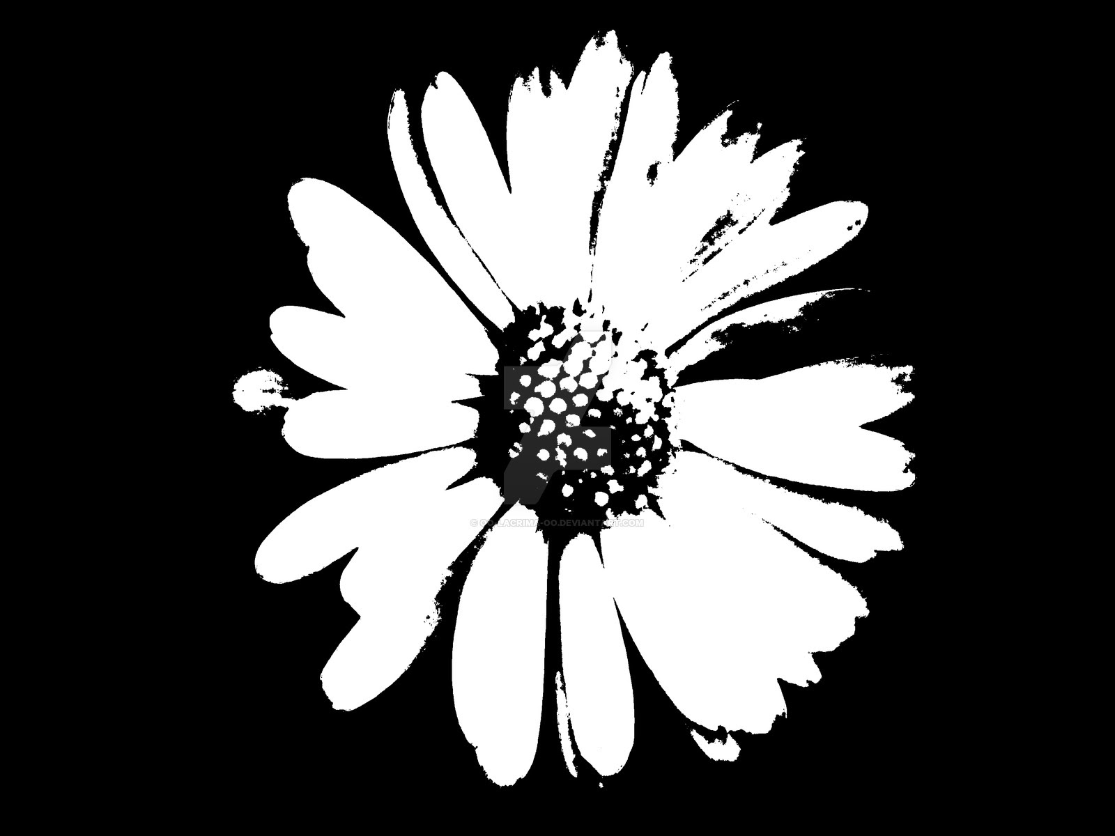 Black And White Daisy Drawing At Getdrawings Free Download