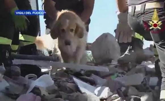 Συγκλονιστικό βίντεο! Ο σκύλος Ρομέο που βρέθηκε στα χαλάσματα στην Ιταλία μετά από 9 ημέρες