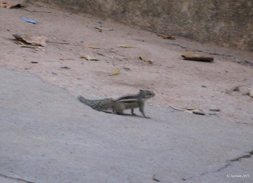 The tiny  squirrel