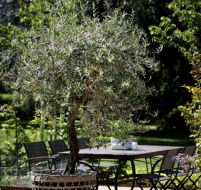 The Garden You Need Olive