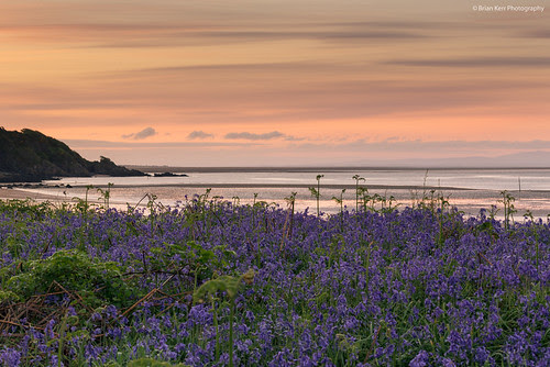 Morning Bluebells by .Brian Kerr Photography.