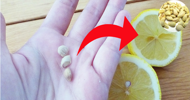Don't waste lemon seeds Take care of them, some benefits that only lemon seeds can get