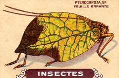 insecte 19