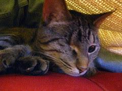 Maggie under the blanket