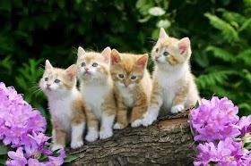Download Gambar Kucing Lucu Hd