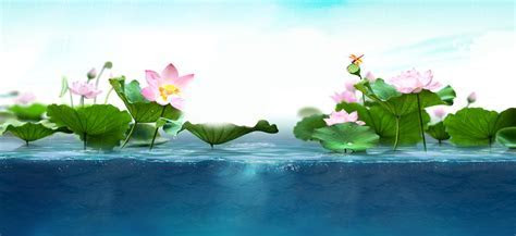 Fresh Lotus Background, Fantasy, Dream, Promotions