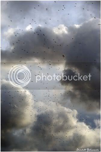 nuage de mouettes