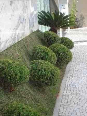 Verdejando poda paisagística