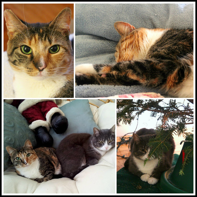 Christmas cat collage