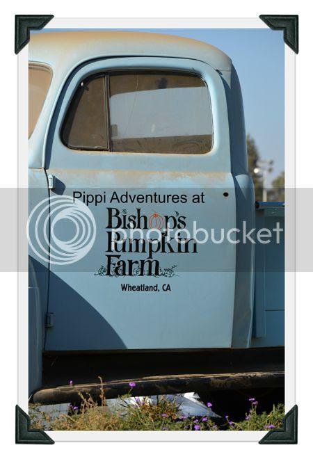 photo Pippi-1-1.jpg