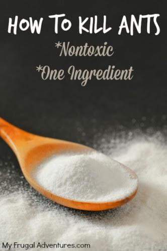 How to Kill Ants- Nontoxic