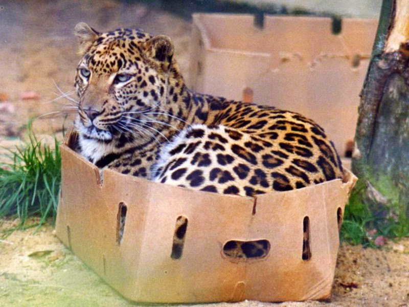 14. Cats are cats and Africa.  unusual, amazing photos,