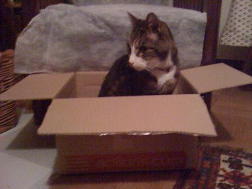 Morris in a Box