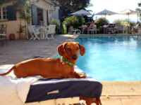 cane+in+vacanza