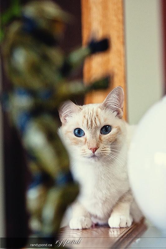 ~ 66/365 Cat Pwns MasterChief ~