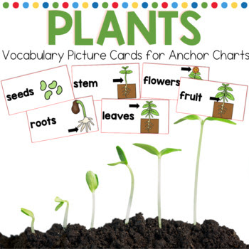 Plant vocabulary cards, anchor chart