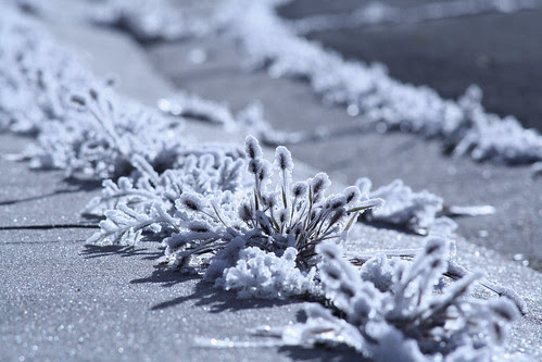 morning frost - 1