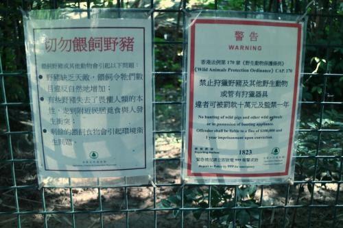 市民餵飼釀衛生問題 漁署研搬大圍野豬到離島