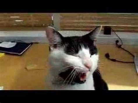 Cat singing happy birthday Free Pets eCards, Greeting