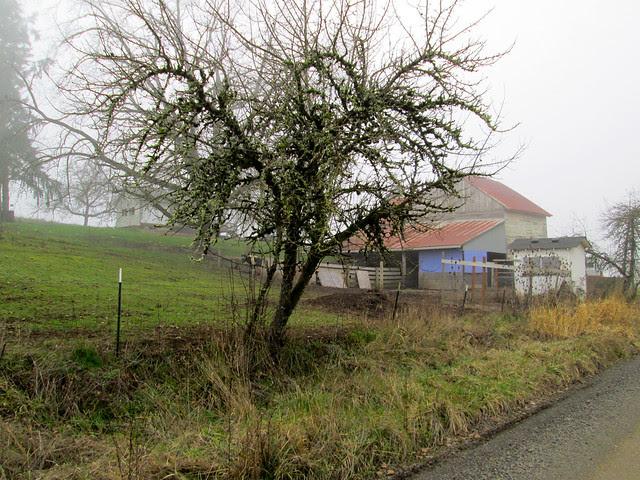 Foggy farm on Stag Hollow Road