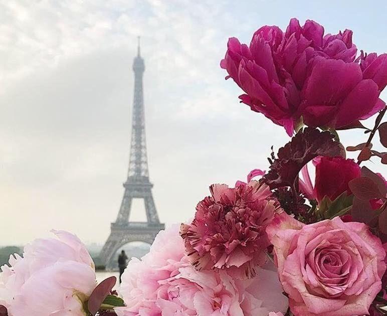 живые обои обои на телефон цветы тюльпаны - Biruellis  Обои на Телефон Цветы