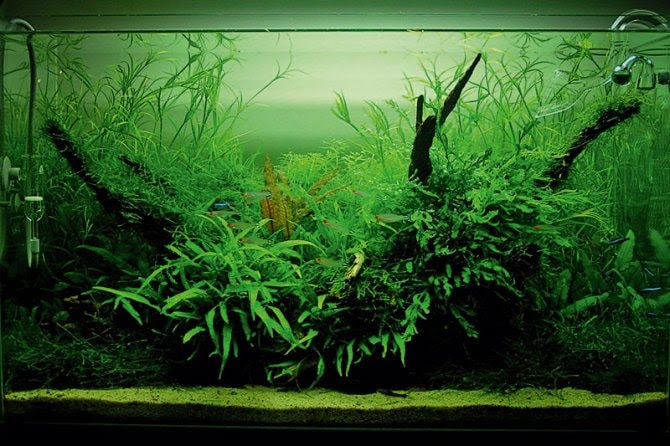 Aquascaping Materials Uk - Aquascape Ideas