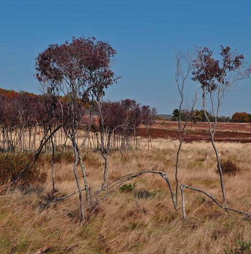 Big Meadows (5)