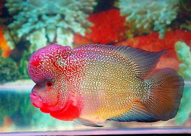 Download 750+ Gambar Dan Harga Jenis Ikan Hias HD Terbaru