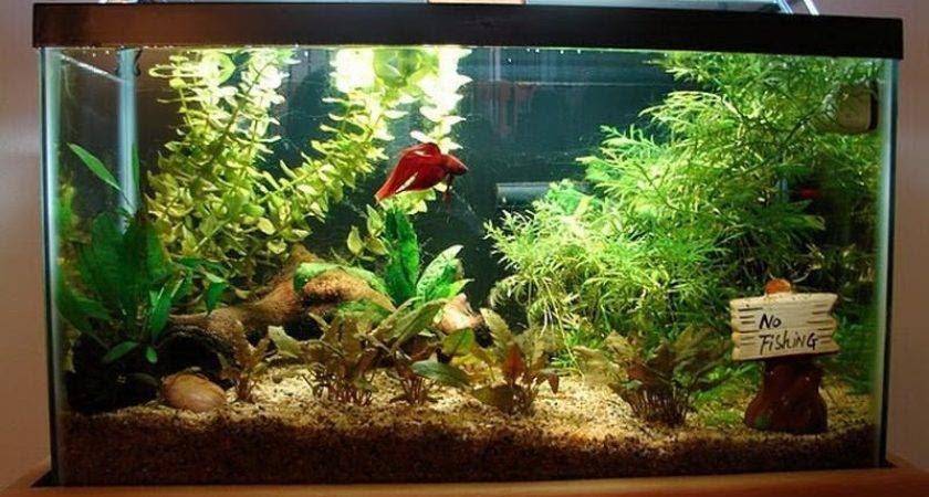 Fish Aquarium Decorating Ideas