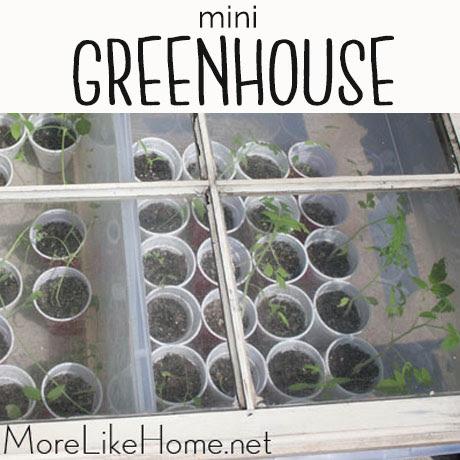 easy makeshift mini greenhouse box