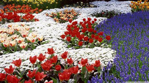 spring flowers   park  hd desktop wallpaper