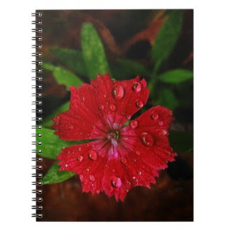 Red Dianthus With Raindrops Notebooks