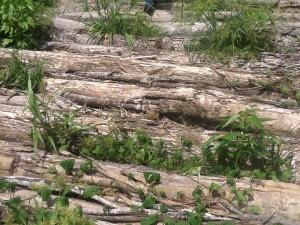 Tribunal Ambiental ordena crear plan para mitigar daño en la trocha.