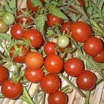 tomate_cerise_rouge_bureau