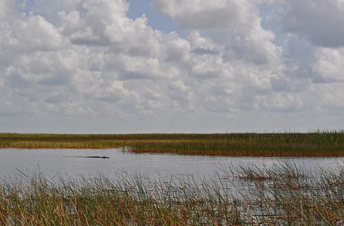 Everglades (14)