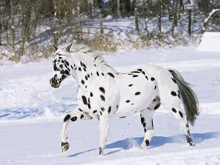 фотографии лошадей красивых
