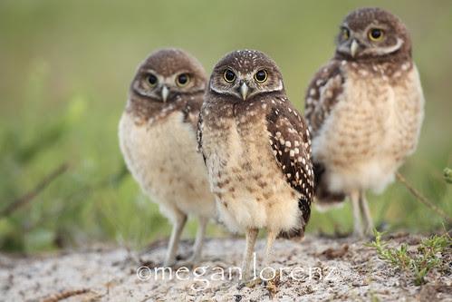 The Three Amigos by Megan Lorenz