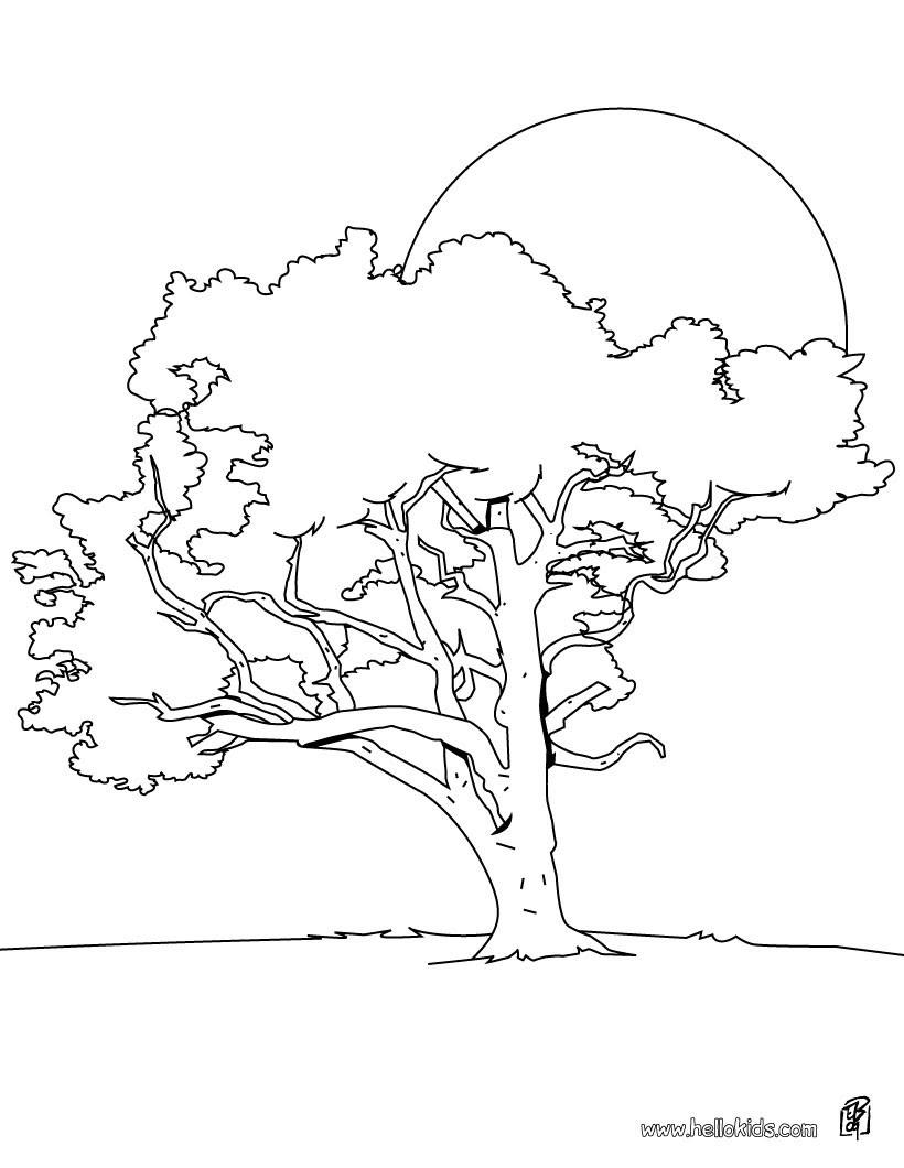 Zitronenbaum zum Ausmalen