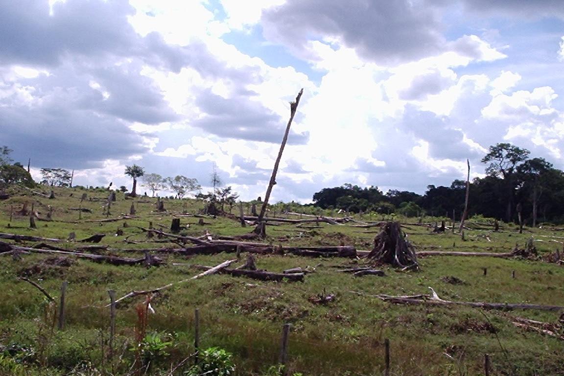 Em 2016, o desmatamento voltou a crescer com uma taxa de 74, 8%. Foto: Daniele Gidsicki/Flickr.