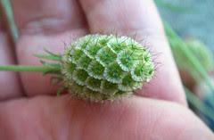 alien seed pod