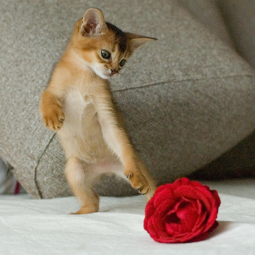Tango for Kitten and Rose by peter_hasselbom.