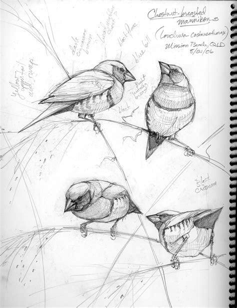 draw  bird   bird drawing  motmot